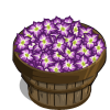 Gladiolus Bushel-icon