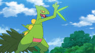Ash Sceptile