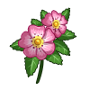 Dog Rose-icon