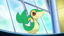 EP661 Snivy de Trip
