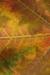 Fall Leaf Habitat.png