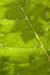 Dew Leaf Habitat.png
