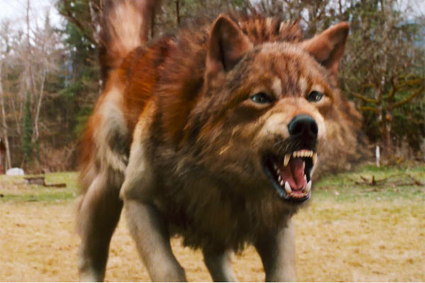 twilight jacob black wolf - photo #18