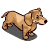 Dachshund Adult Cream-icon