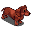 Dachshund Adult Red-icon