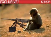 Machine Gun Monkey