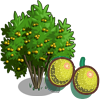 Yellow Passion Fruit Tree-icon