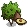 Hass Avocado Tree-icon