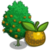 Shinko Pear Tree-icon