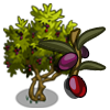 Mission Olive Tree-icon