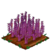 Purple Asparagus 66