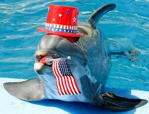 FourthofjulyLibertythedolphin