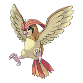 017Pidgeotto