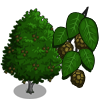Red Alder-icon