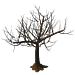 Winter Oak-icon