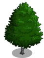 Red Alder1-icon
