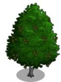 Red Alder2-icon