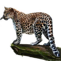 Huge item amurleopard 01