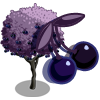 Giant Black Cherry Tree-icon