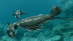 http://images2.wikia.nocookie.net/__cb20110224093419/walkingwithdinos/images/5/58/Anomalocaris_2.jpg