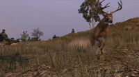 Rdr buck