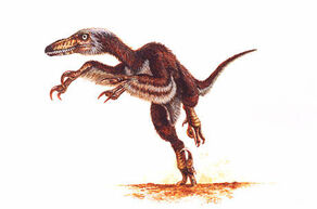 Velociraptor mongoliensis jmallon