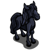 Black Gypsy Foal-icon