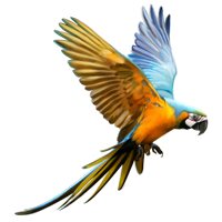 Huge item macaw 01