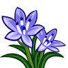 Spring Squill-icon
