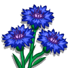Cornflower-icon
