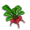 Radish-icon