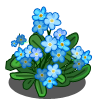 Forget-me-not (Spring Basket)-icon