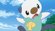 Ash Oshawott