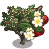 Hawthorn Tree-icon