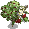 Bird Cherry Tree-icon