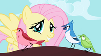 Fluttershy correcting a blue jay&#39;s rhythm S1E01