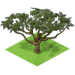 Acacia Tree-icon.png