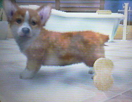 Piszkos kutya fürdetés előtt