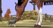 The sims 3 Cat &amp; Horse