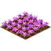 Magenta daisies.png