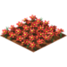 Red daisies.png