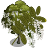 Black Locust Tree-icon