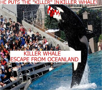 Killer Whale Escape from Oceanland