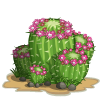 Pincushion Cactus I-icon