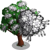 Chinese Tamarisk-icon