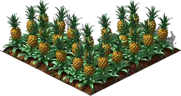Pineapple5.png