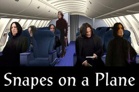 Snapes On A Plane by Day VPuppy