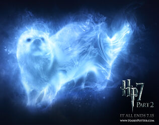 My patronus otter