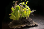 Salad-centerpiece-alinea-150