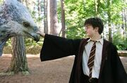 Harryandbuckbeak